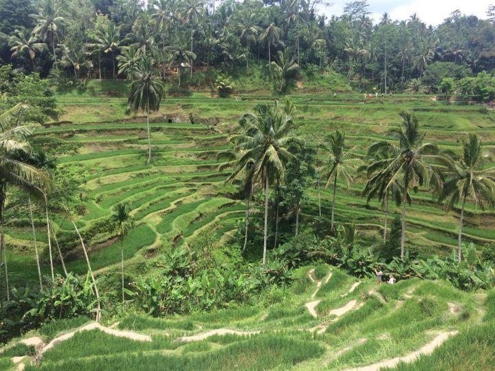 Bali in 3 Wochen: Route &Tipps!