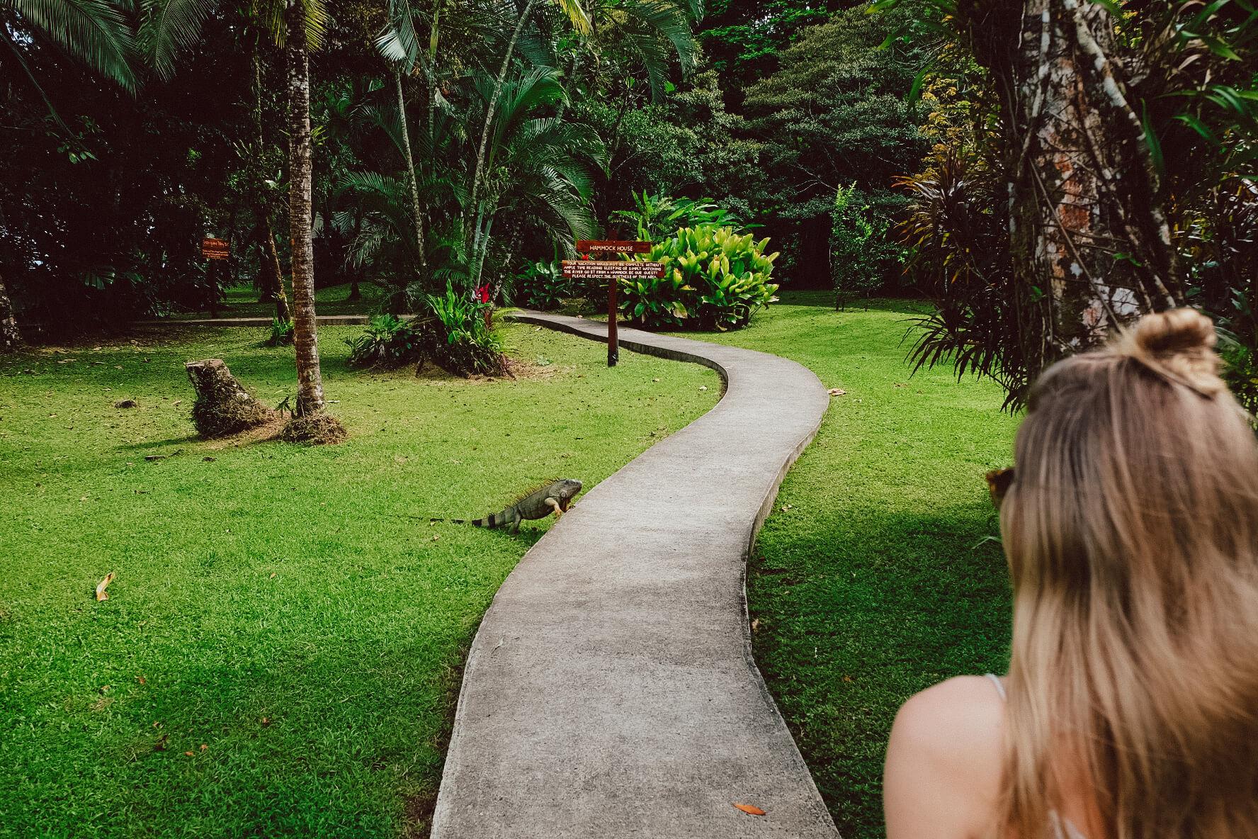 Nationalpark_Tortuguero_Nationalpark_Tortuga Lodge